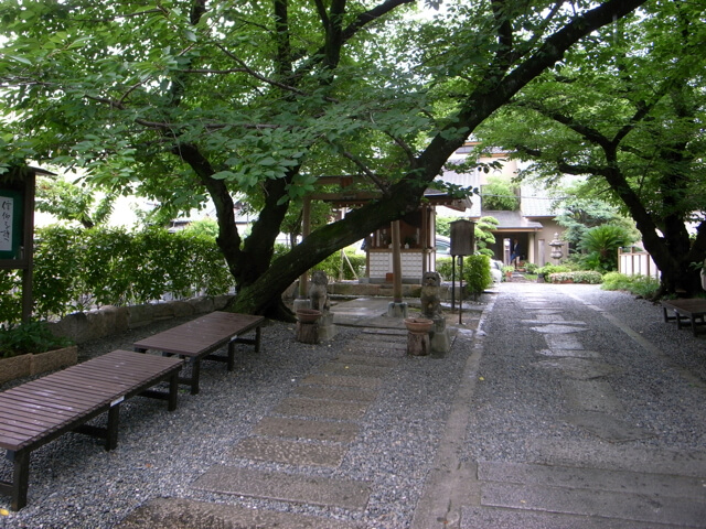 光傳寺境内。戦後、国子さんのお祖母さまが植えられた樹齢約70年の桜が立派に生い茂り、木陰にはふらりと参拝した人が休めるベンチがあります